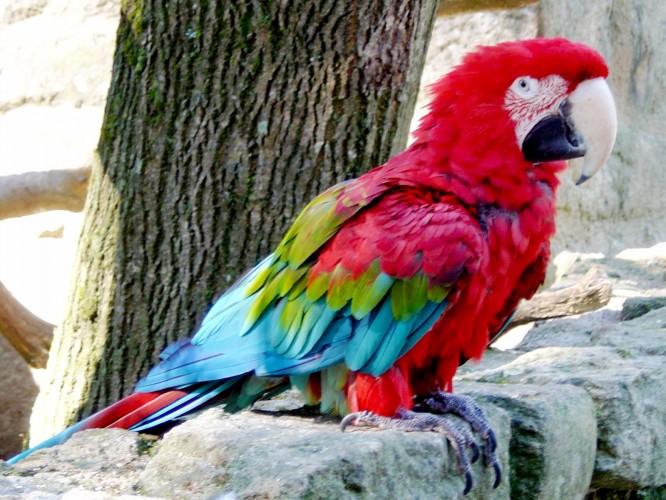 Daddy, je veux un perroquet!